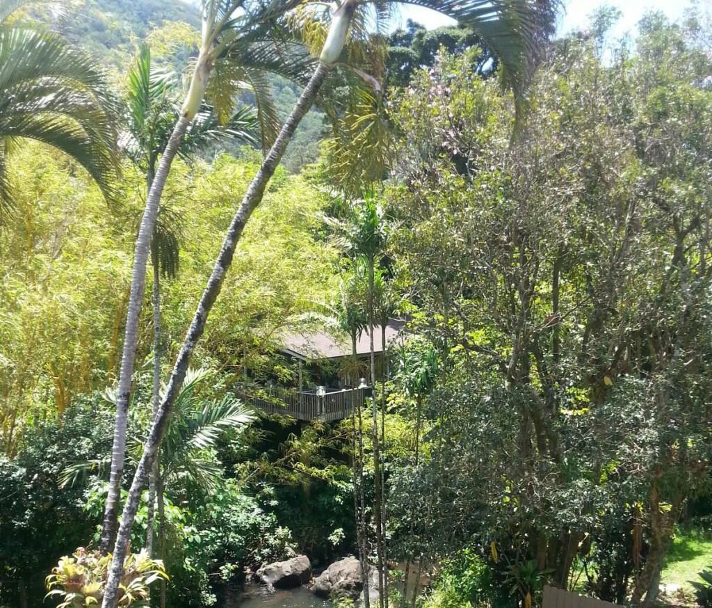Tree-house-from-bridge-1