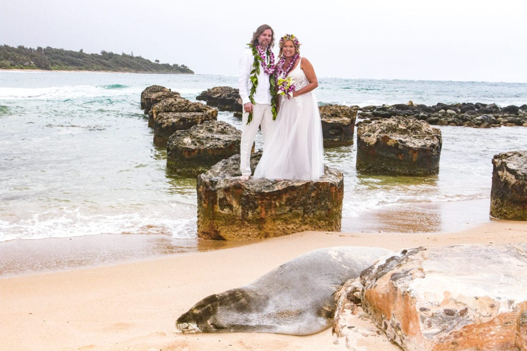 sweet-hawaii-Monk-Seal-Anahola-Beach-kauai-wedding